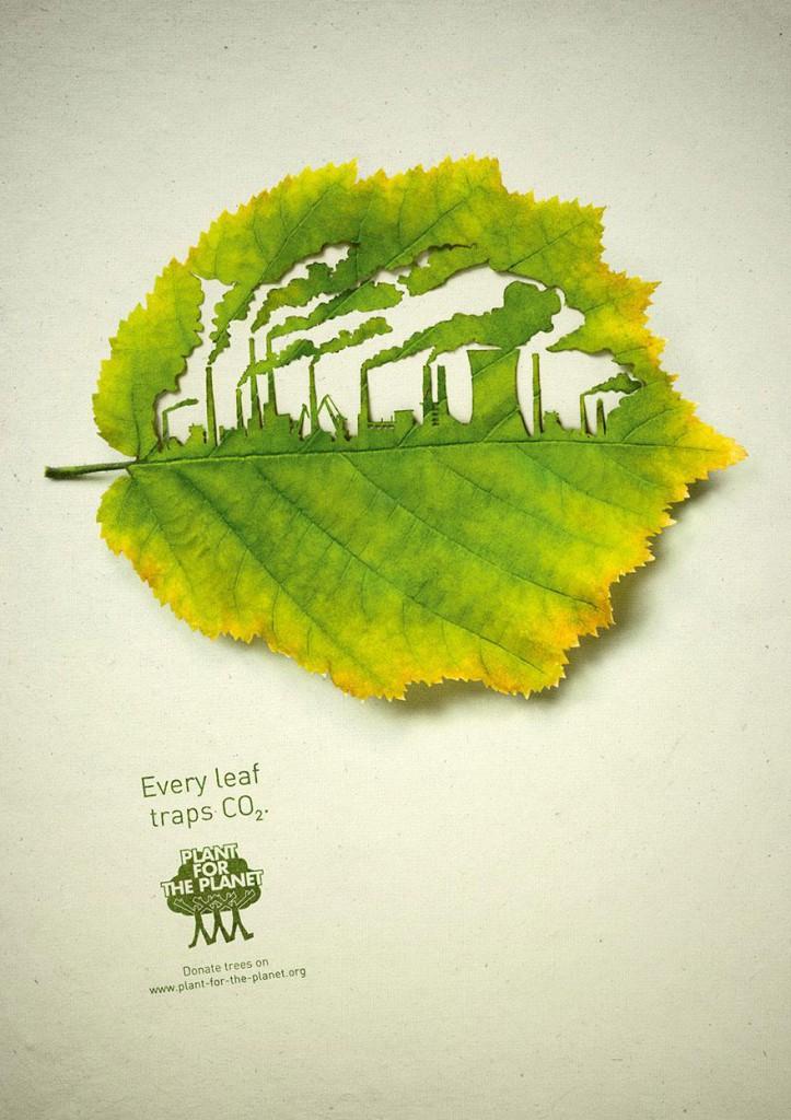 Ogni foglia intrappola CO2