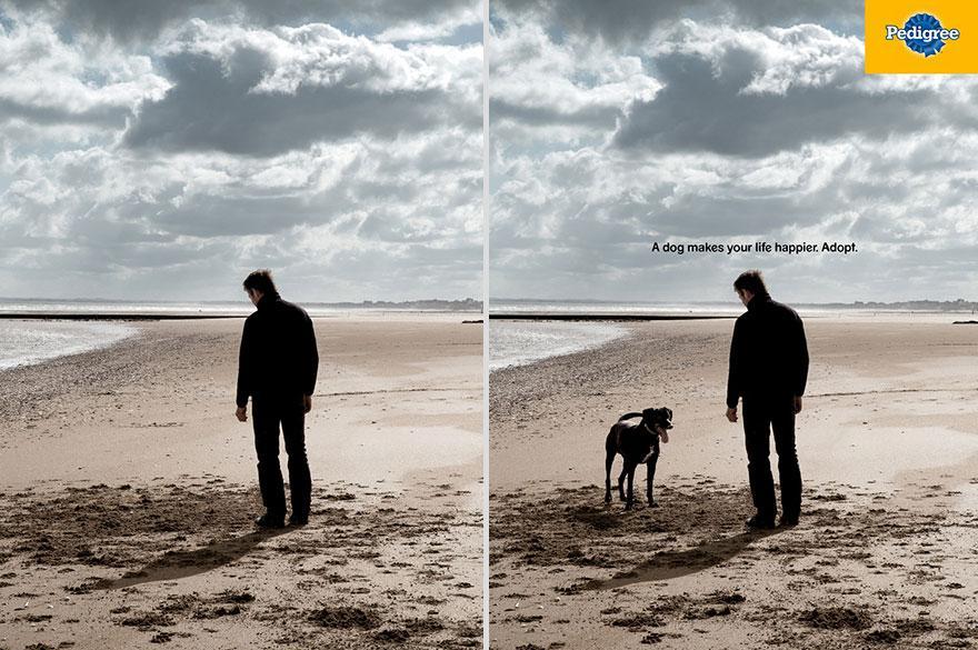 Adottalo! Un cane rende la tua vita più felice